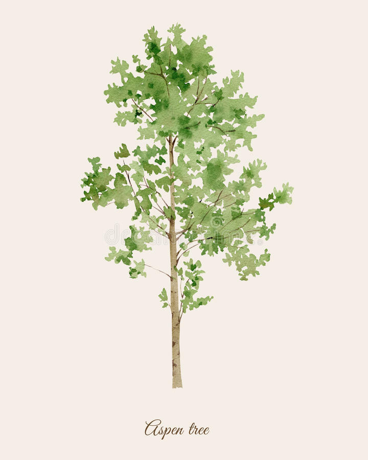 与白杨木树的手画水彩海报 向量例证
