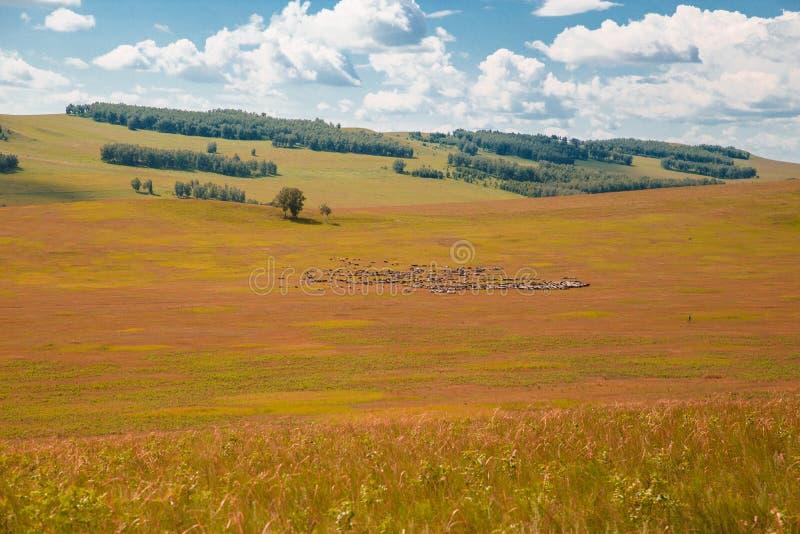与白色云彩、树、领域和草甸的天空蔚蓝有绿草的,反对山 r 农村夏天 免版税图库摄影