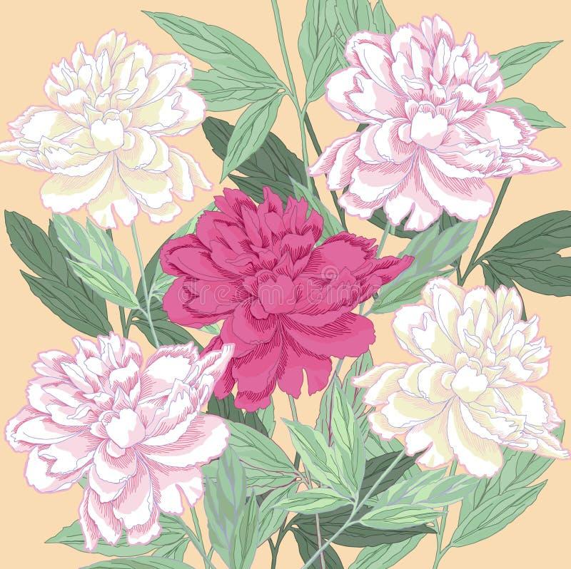 与白色和一桃红色牡丹的背景 库存例证