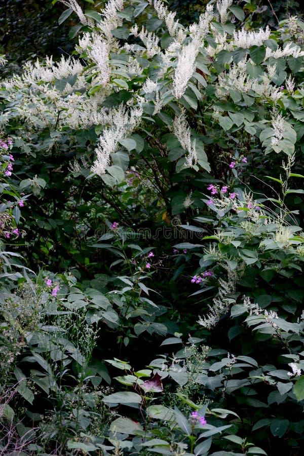 与白色和桃红色花的狂放的植被 库存照片