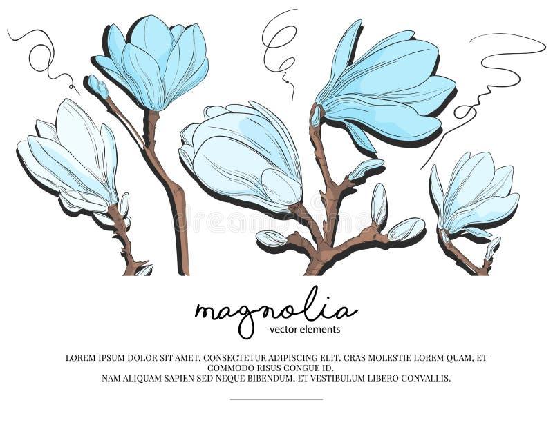 与白色和蓝色木兰花的花卉婚姻的请帖模板设计 春天卡片模板设计 皇族释放例证
