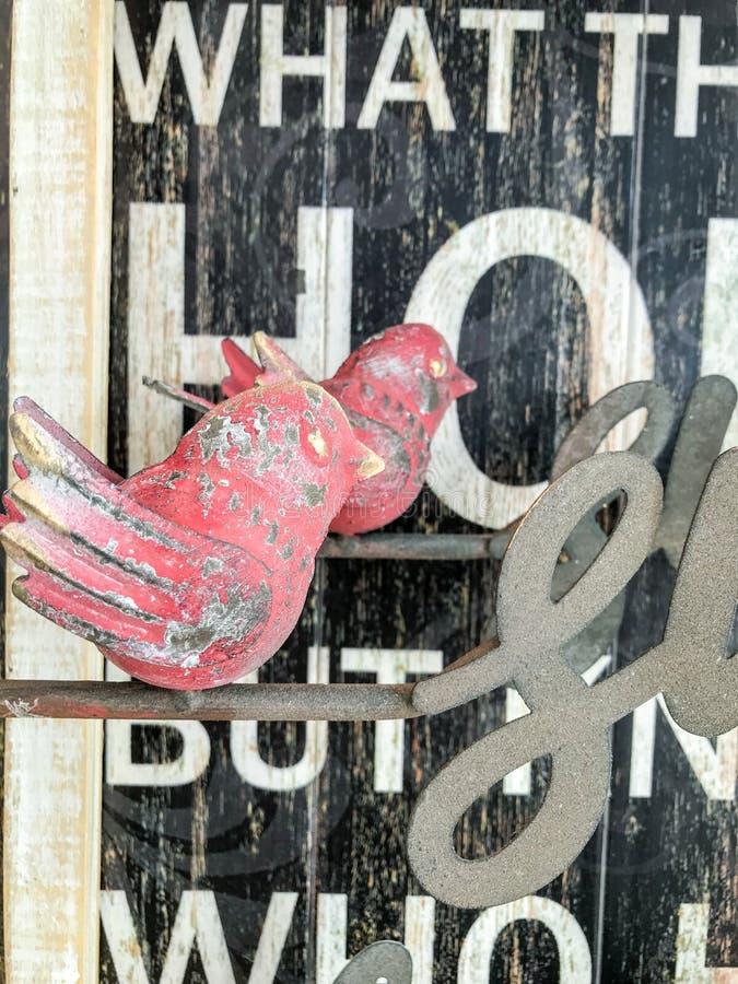 与白色和黑色的红色木鸟 免版税图库摄影