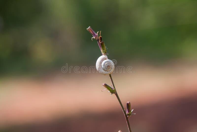 与白色壳的蜗牛 图库摄影