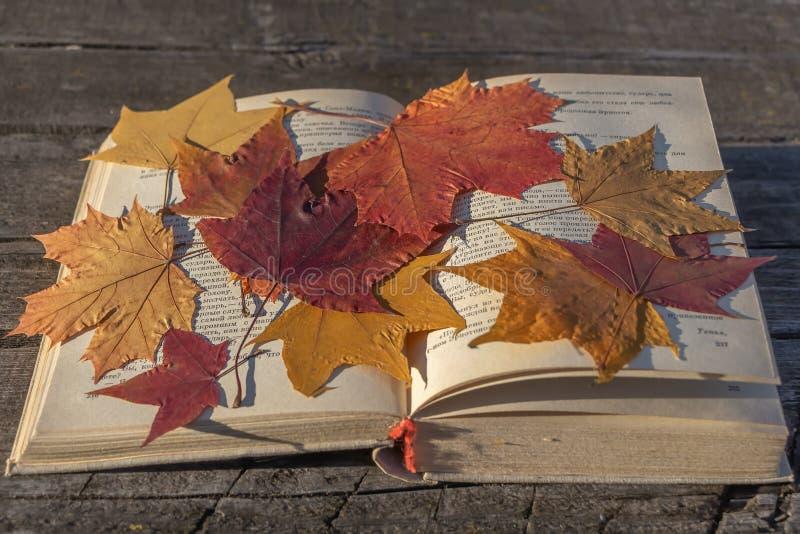 与白色布料盖子的一本老厚实的被打开的书和黄色一个小组干燥秋叶干燥标本集的槭树红色和 库存图片