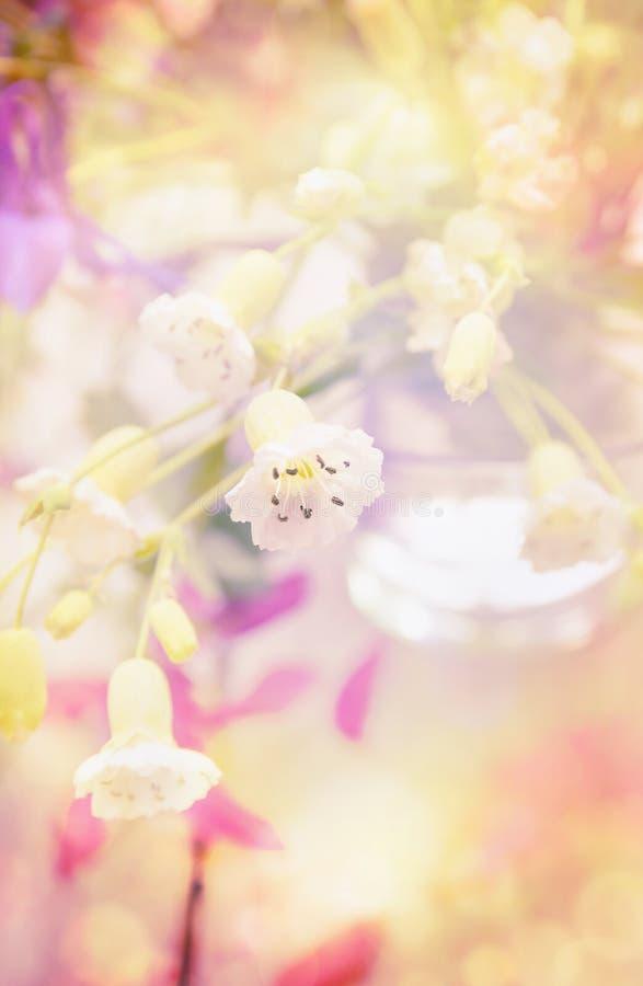 与白色庭院的浪漫卡片开花,淡色 图库摄影