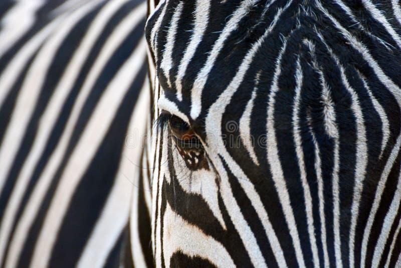 与白色条纹的与黑条纹的黑色或白色 图库摄影