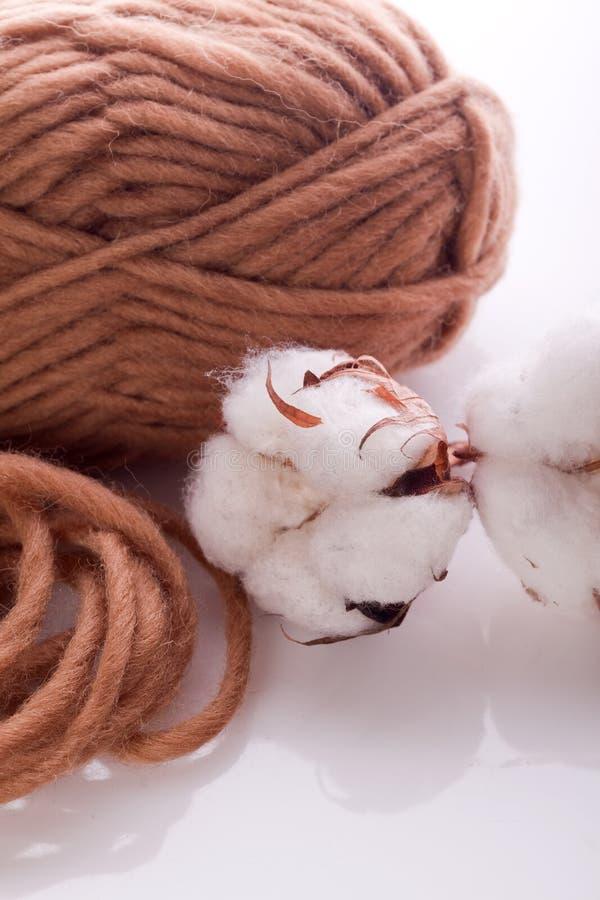 与白色棉树的羊毛 库存图片