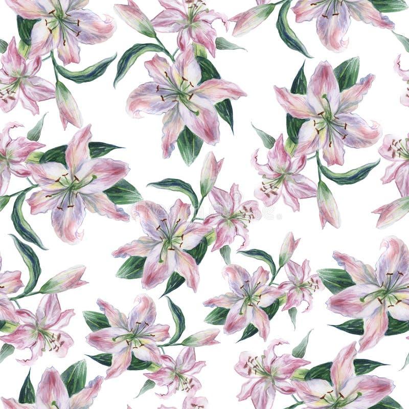 与白色水彩lilys的无缝的样式 库存例证
