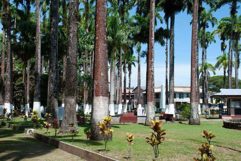 与白色油漆的热带树在吠声在Parque巴尔加斯,利蒙, 免版税库存照片