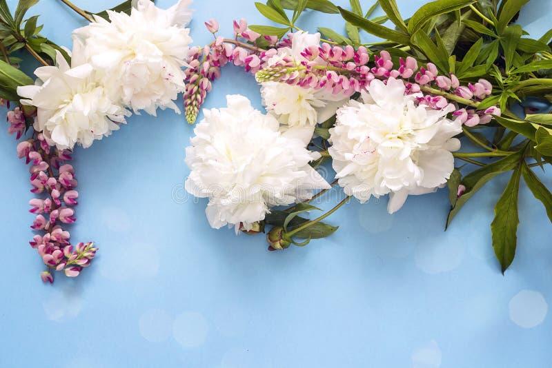 与白色牡丹和桃红色凶猛花的蓝色背景 复制空间 免版税库存照片