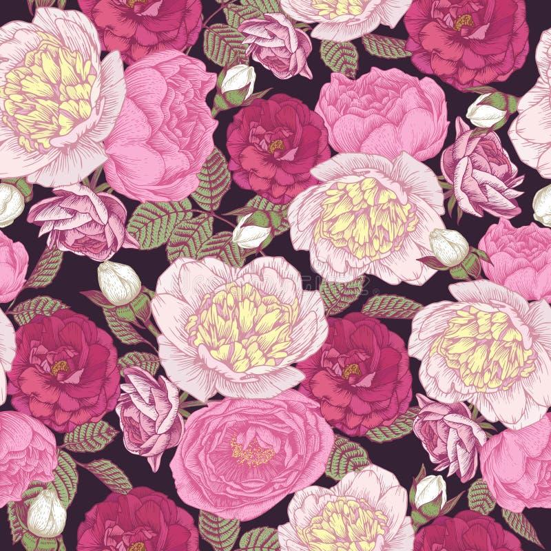 与白色牡丹,桃红色和绯红色玫瑰的花卉无缝的样式 向量例证