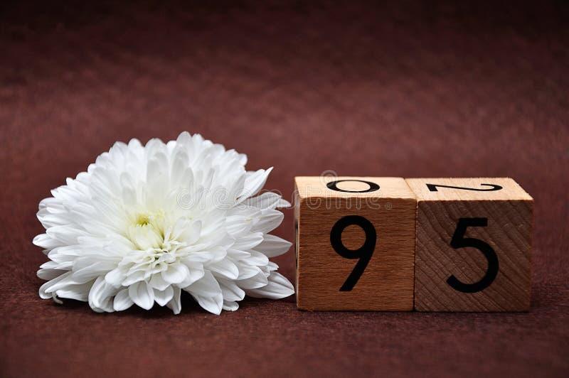 与白色翠菊的第九十五 免版税库存图片
