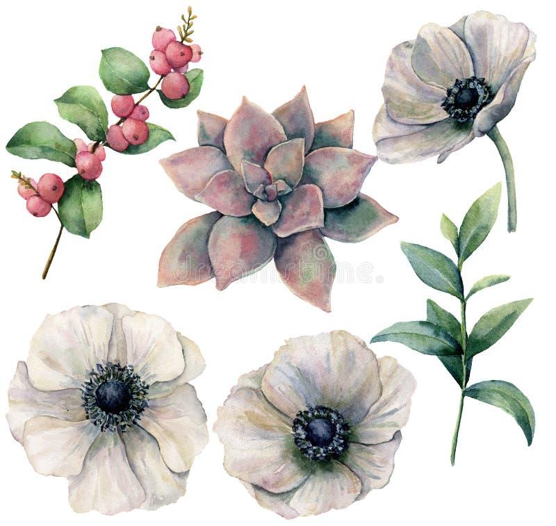 与白色银莲花属和植物的水彩花卉集合 手画桃红色多汁植物、玉树叶子和珊瑚金丝桃属植物 向量例证