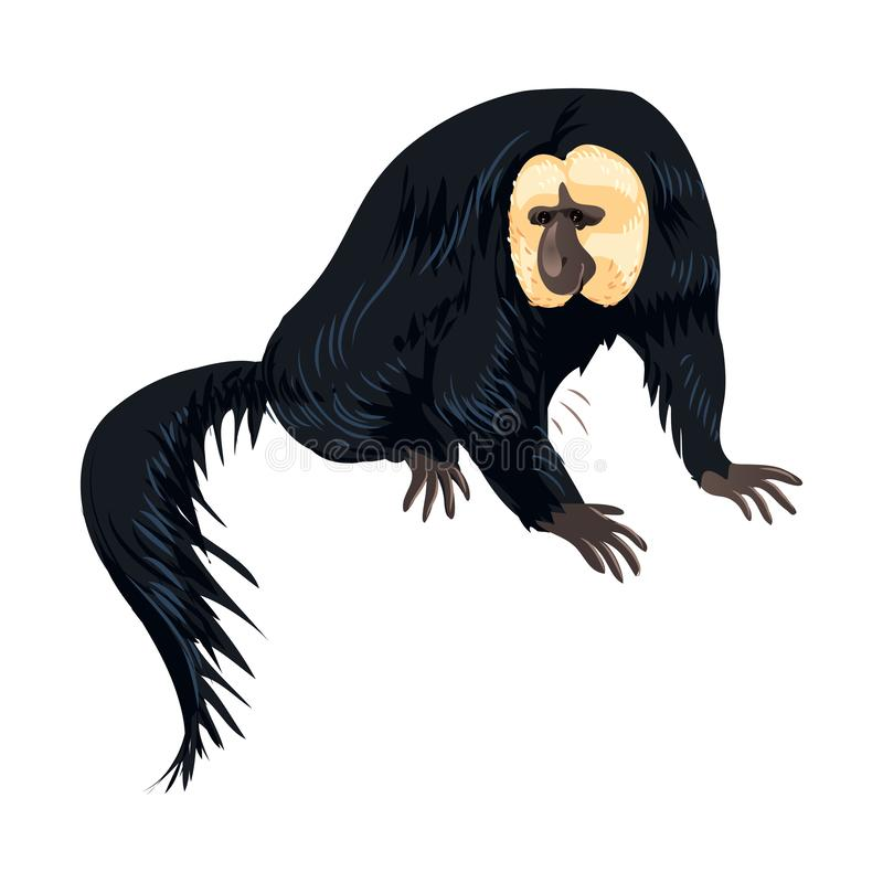 与白色面孔和长发尾巴的哺乳动物的猴子 皇族释放例证