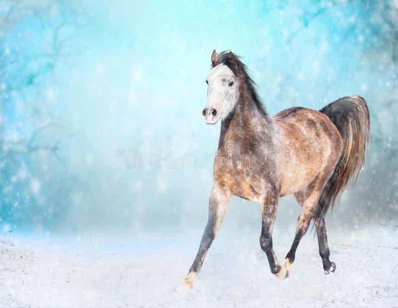 与白色顶头奔跑的布朗马在多雪的冬天小跑 免版税图库摄影