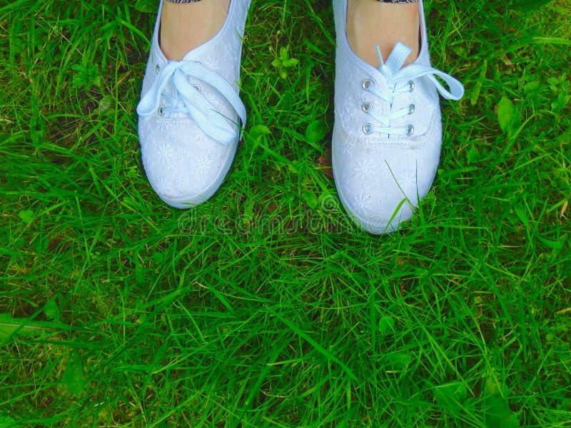 与白色snikers的绿草 库存照片