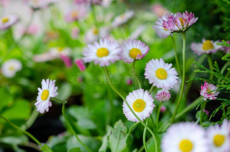 与白花的夏天风景 库存图片