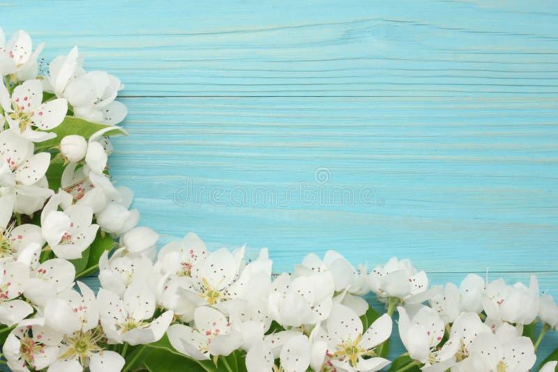 与白花的春天背景在蓝色木背景进展 顶视图 库存图片