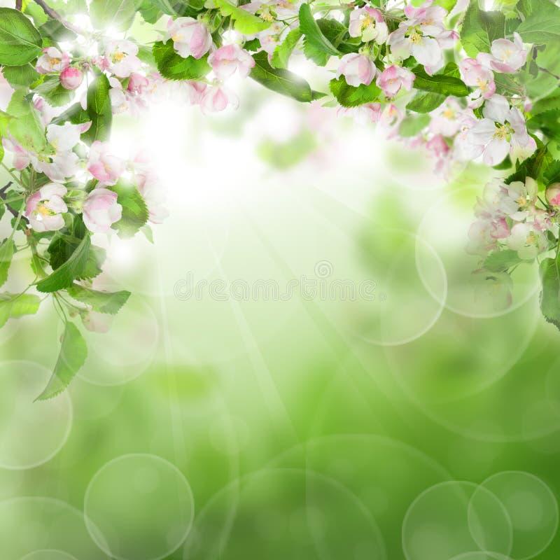 与白花,绿色叶子的抽象绿色背景 库存照片