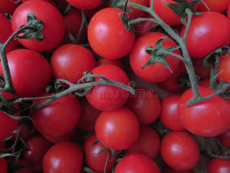 与的可口蕃茄好神色和难以置信的颜色 免版税库存照片