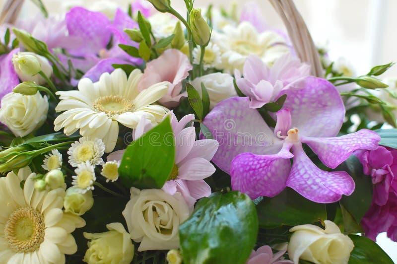 与的美丽的联合的桃红色花束大丁草 免版税库存照片