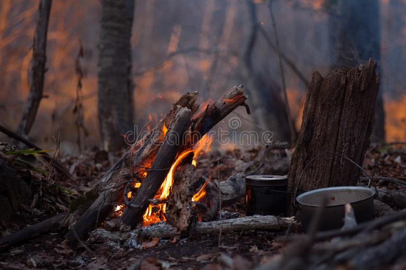与的营火在它附近的kittles 图库摄影