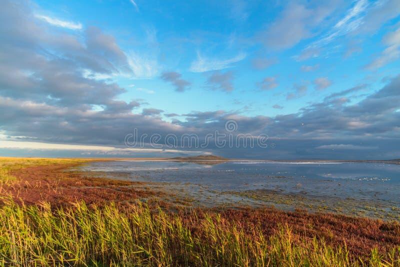 与盐湖的狂放的自然风景、绿色和红色草和多云蓝天在日出 库存图片