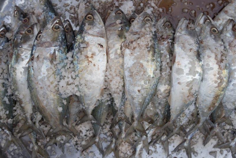 与盐的生鱼片发酵 食品保藏在新鲜市场上 免版税库存照片