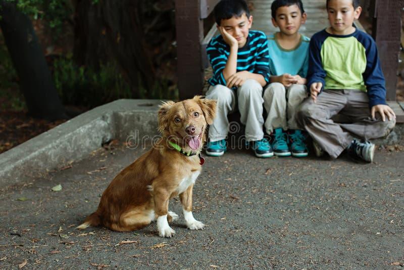 与看的男孩的逗人喜爱的小狗  库存照片