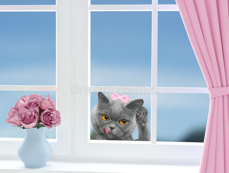 与看通过窗口的蝴蝶结的逗人喜爱的猫 免版税库存图片