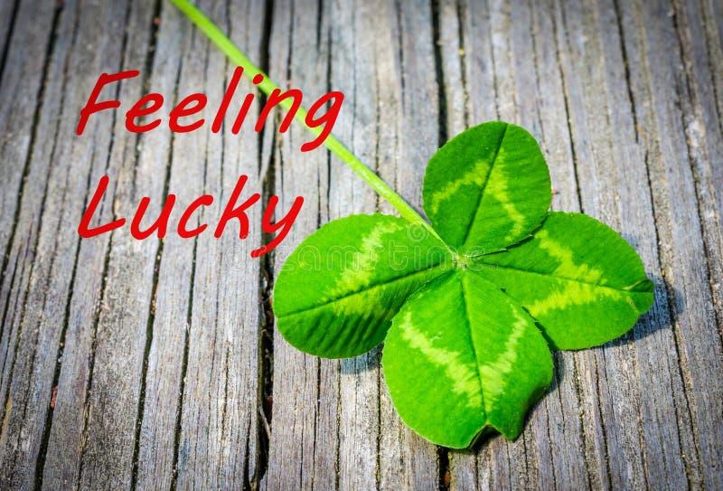 与真正的自然四片叶子三叶草的感觉的幸运的公告 免版税图库摄影
