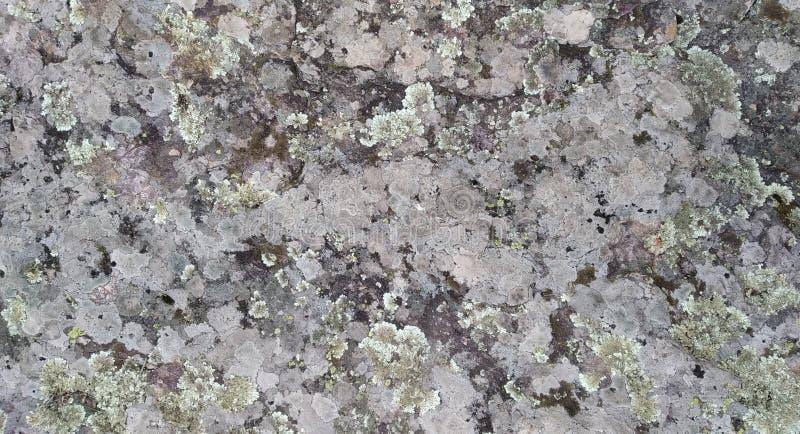 与真菌的岩石纹理 库存照片