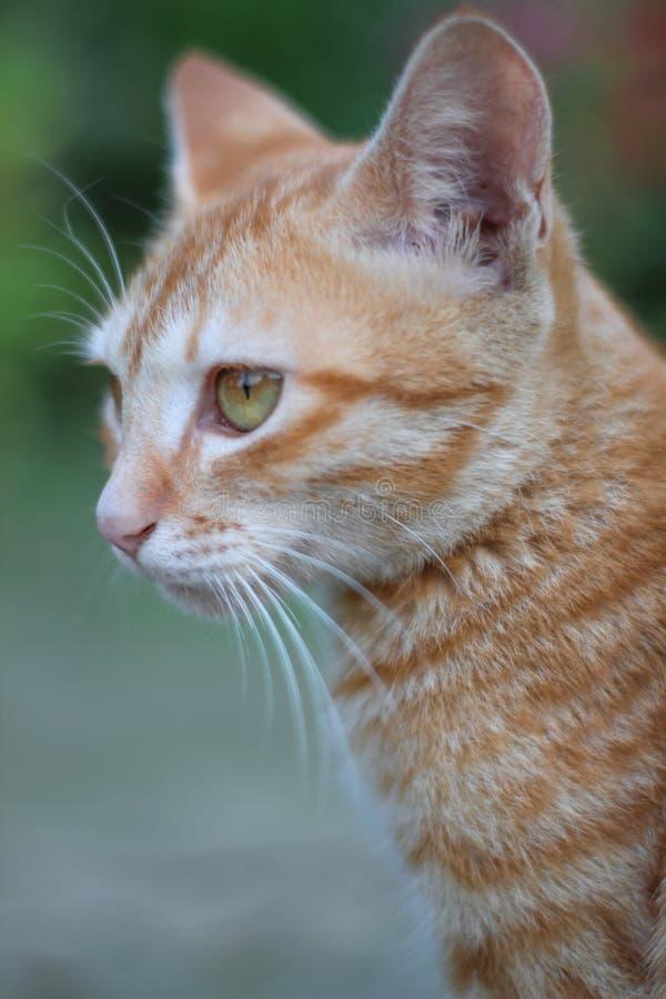 与眼睛画象照片的猫小猫 免版税库存图片
