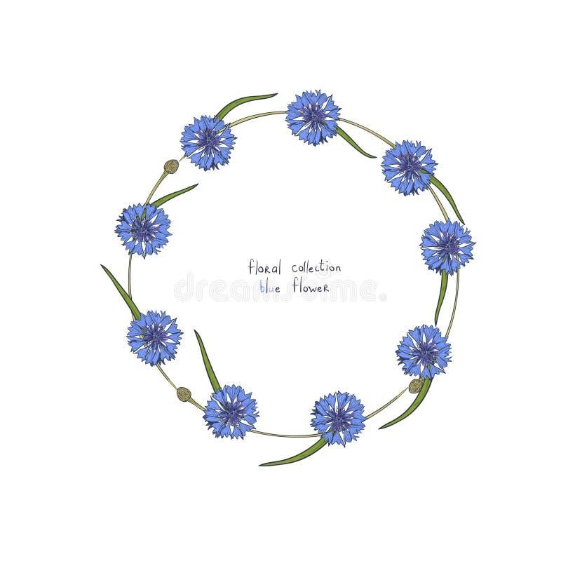 与矢车菊和绿色叶子风格化蓝色花的花卉花圈  皇族释放例证