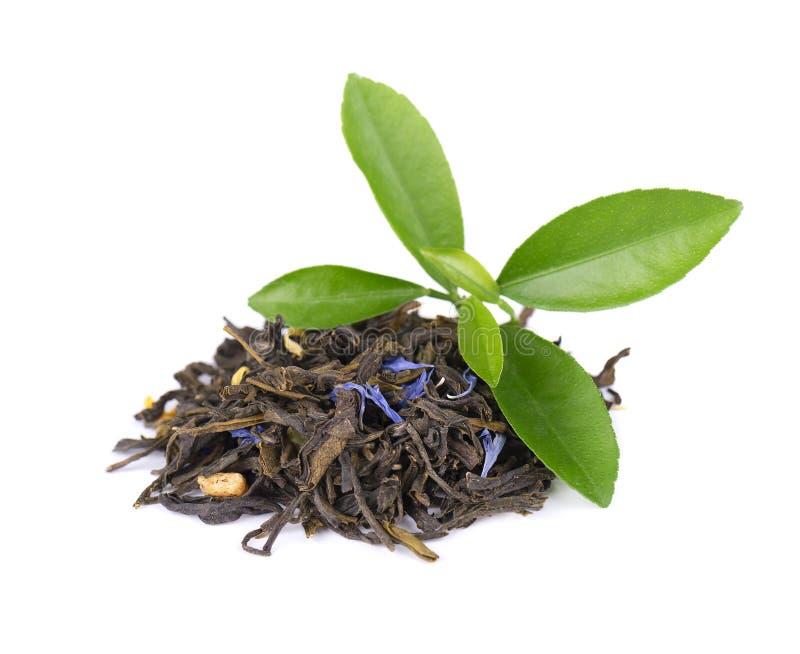 与矢车菊和脯的绿色锡兰茶,隔绝在白色背景 图库摄影