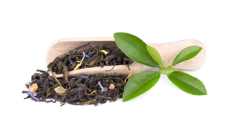 与矢车菊和脯的绿色锡兰茶,隔绝在白色背景 库存图片