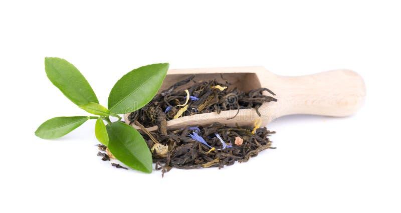 与矢车菊和脯的绿色锡兰茶,隔绝在白色背景 免版税库存图片