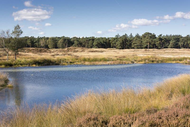 与石南花、森林、森林、水、湖、白色云彩和蓝天的荷兰风景 免版税图库摄影
