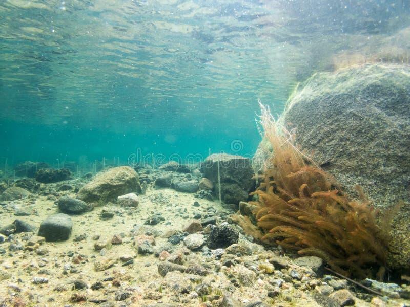 与石头和水芪草植物的水下的风景 免版税图库摄影