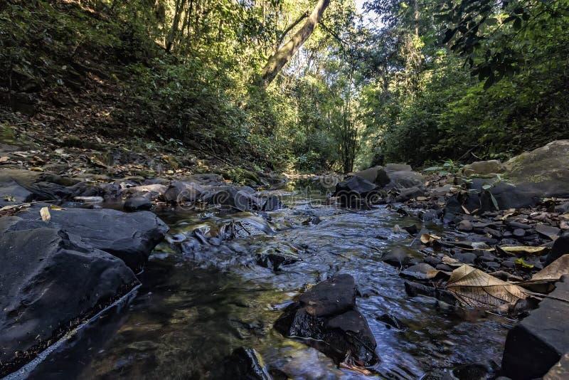 与石头的小河在森林之间在圣丽塔做Passa Quatro, São保罗,巴西 免版税库存照片