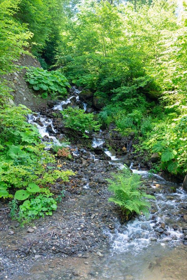 与石头的山小河,围拢由绿叶 库存图片