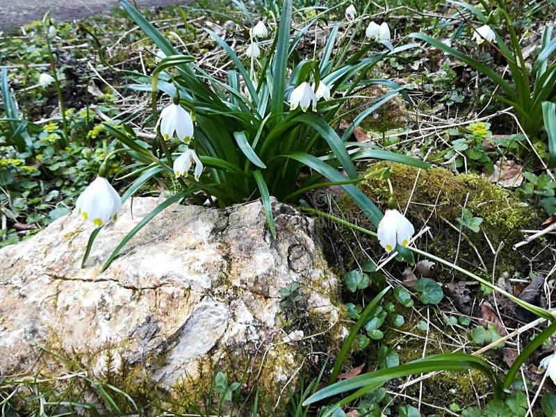 与石春天自然太阳的花 免版税库存图片