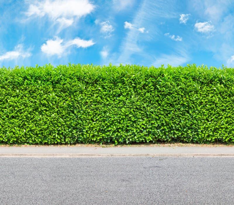 与石渣路的零件的高树篱 免版税库存照片