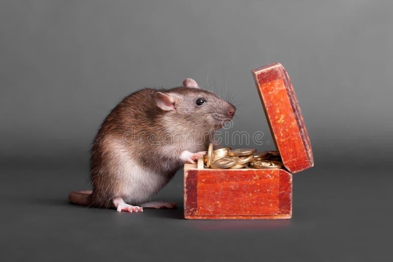 与硬币的胸口的鼠 库存图片