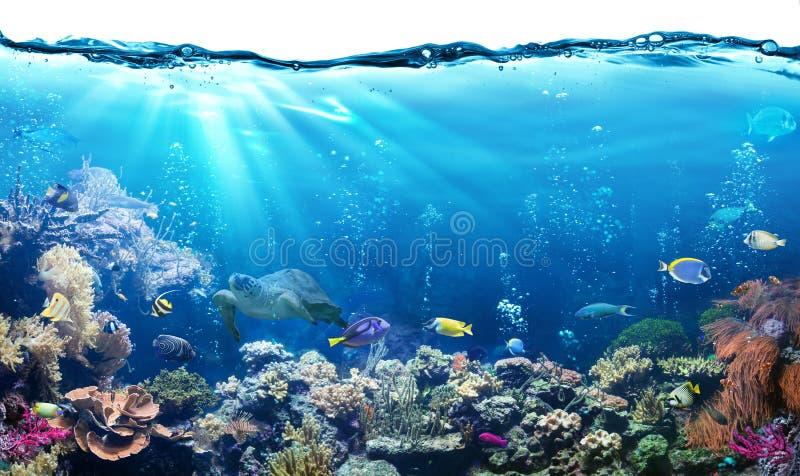 与礁石的水下的场面 免版税库存图片