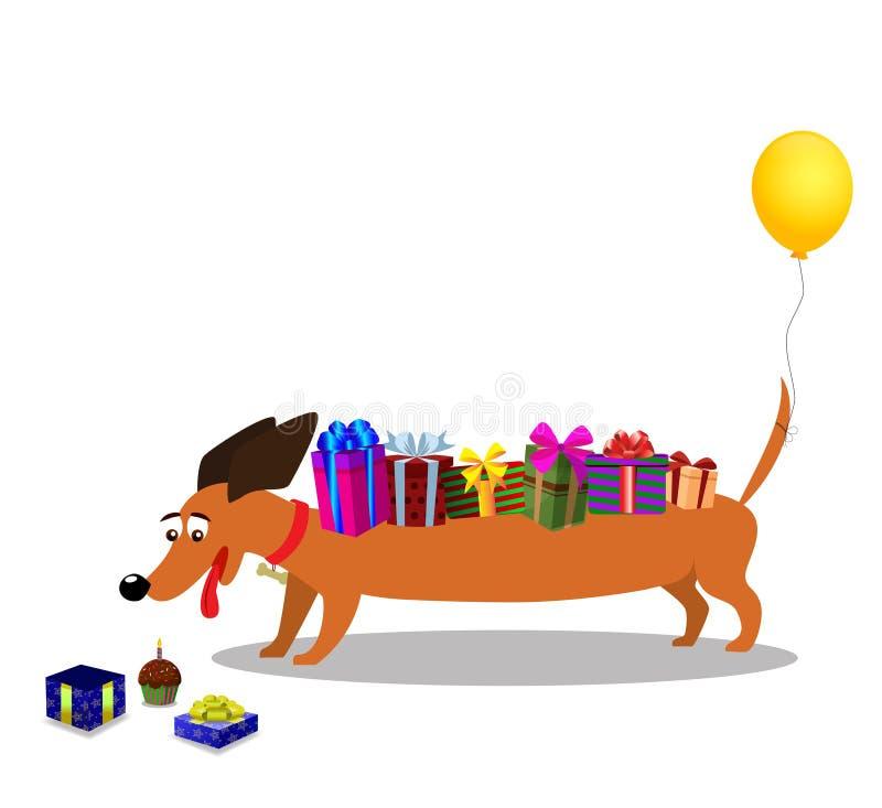 与礼物在后面和baloon的达克斯猎犬在尾巴观看在礼物的 皇族释放例证