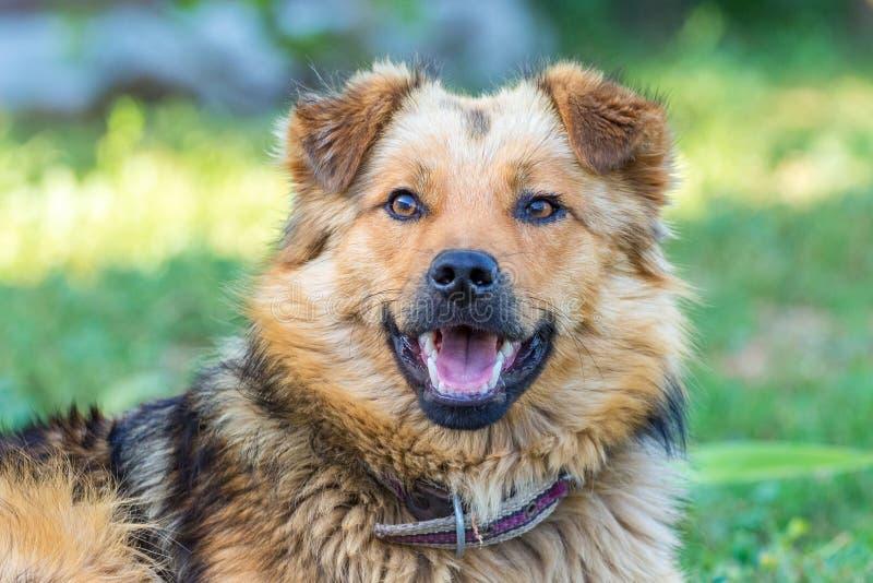 与神色的逗人喜爱的卷毛狗到照相机里 一条狗的画象与一开放mouth_的 库存图片