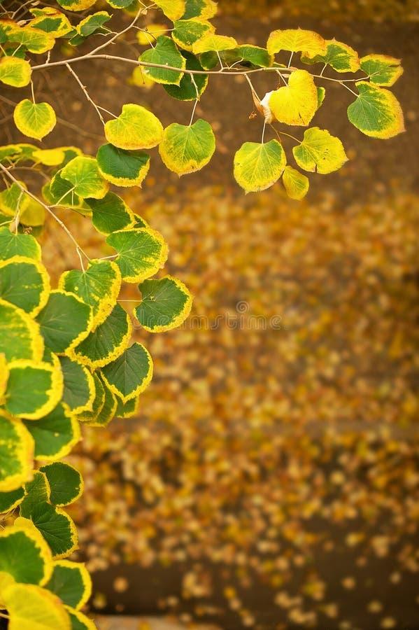 与秀丽bokeh的抽象秋季背景 库存照片