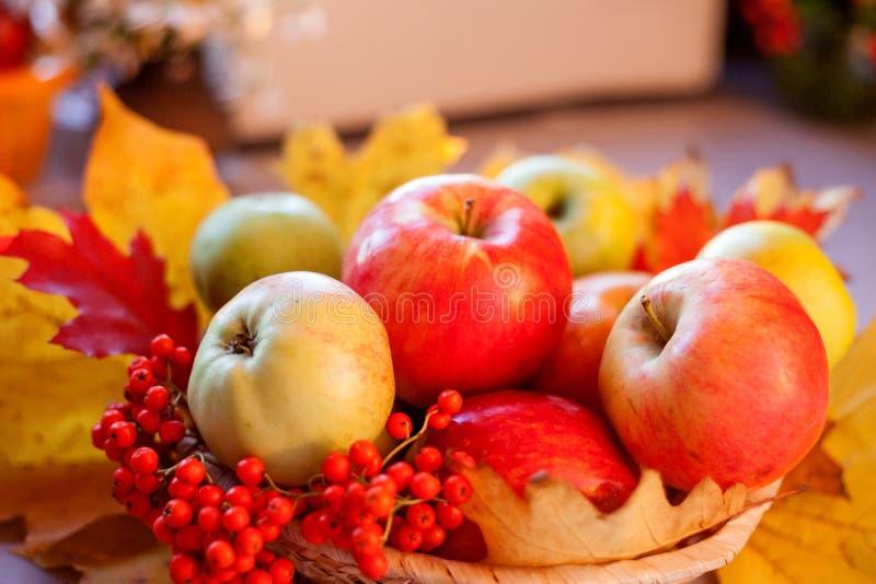 与秋叶和花揪的红色成熟苹果 免版税库存照片