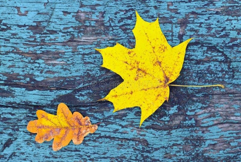 与秋叶的五颜六色的秋天背景在蓝色上色了葡萄酒木头纹理 库存照片